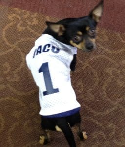 Dog Reversible Jerseys